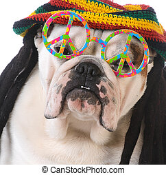 funny dog with dreadlock wig and peace glasses on white...