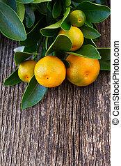mandarynka, drzewo,