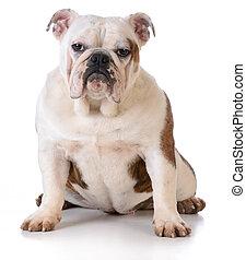 dog with muddy feet