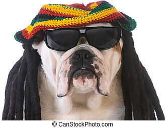 funny dog with dreadlock wig on white background