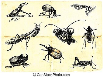 insect, beetles - line art, hand drawn pack - beetles