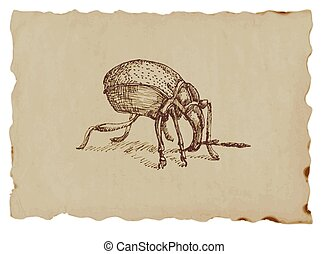 beetle - An hand drawn illustration - beetle
