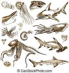 marine life - An hand drawn illustration - marine life...