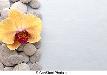 Yellow orchid - Orchid flower on the wooden background