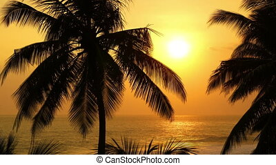 tropical sea sunset and palm -  zoom timelapse