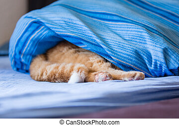 time out - red tiger cat hiding under bed sheet