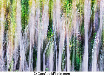Yucca Tree Abstract - A blurred abstract of a grove of yucca...