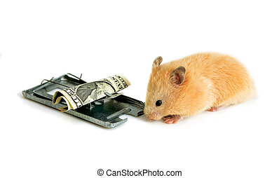 free money is only in a mousetrap - free money, like cheese...