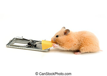 free cheese is only in a mousetrap - free money, like cheese...
