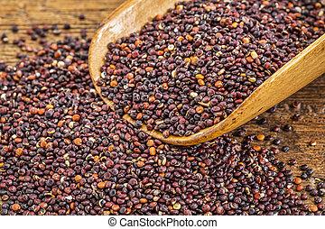 scoop of black quinoa grain