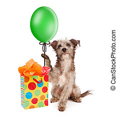Dog Holding Party Balloon With Gift - Cute puppy dog holding...