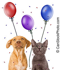 Puppy and kitten looking up at party favors