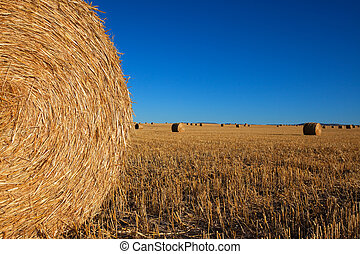 Big Round Haybales - A large round haybale with other...
