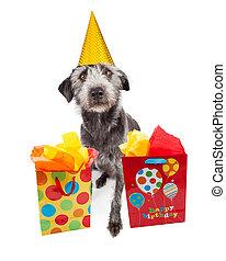 穿, 狗, 禮物, 生日, 黨, 帽子