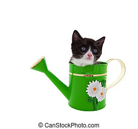Watering Can Kitty - Three week old kitten in a green...