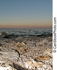 Salton Sea - dead fish on the shores of the polluted salton...