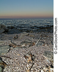 Salton Sea - dead fish on the coast of the Salton Sea...