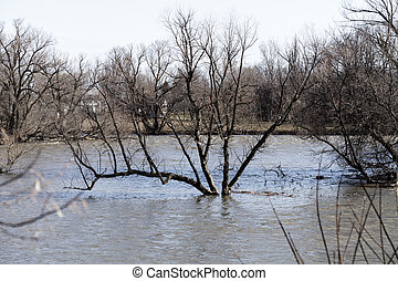 Flooding Scene with River and a tree in the middle