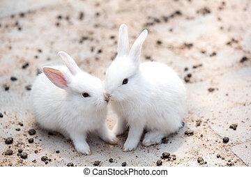 Funny baby white rabbit in farm