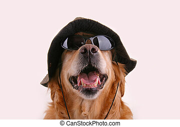 disguised dog - golden retriever dog with hat and sunglasses