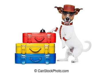 bellboy dog - jack russell bellboy dog with stack of luggage...