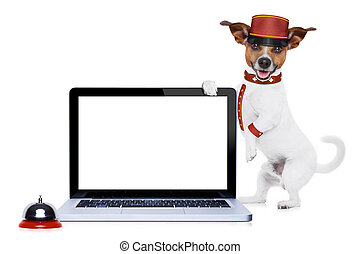 bellboy dog - jack russell bellboy dog holding a blank and...