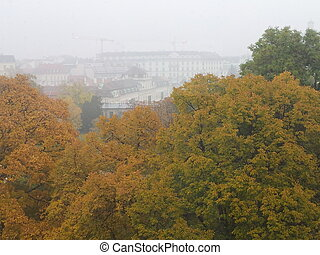 Colors of Fall on a Foggy Day