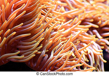 sea anemone in the water