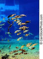 tropical fish - a group of tropical fish swimming in the...