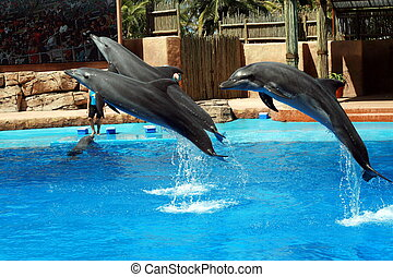 dolphins jumping out of the pool at a show