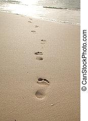 Pies, en, el, arena,
