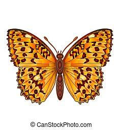 Butterfly Argynnis aglaja beautiful butterfly vector...