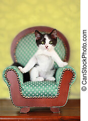 Kitten Sitting on a Chair - Black and White Kitten Sitting...