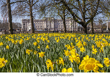View of Buckingham Palace from Green Park in London