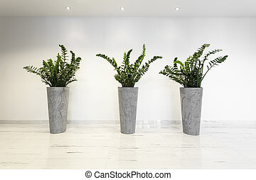 Plants in flowerpots - Horizontal view of three plants in...