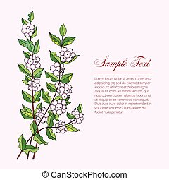 several branches Symphoricarpos. vector illustration with...