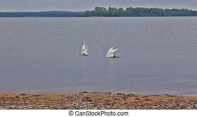 goose bird riverbank river water rural stack waterfowl pond