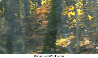 blurred car trip in sunny autumn forest road