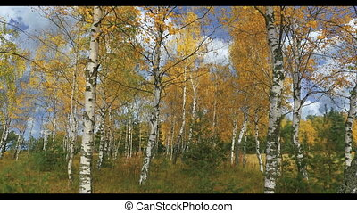 Autumn forest landscape in october,