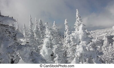 Beautiful winter landscape with snow covered trees in mountains