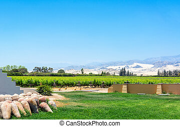 Pisco Vineyard in Peru - Grape vines for use in the...