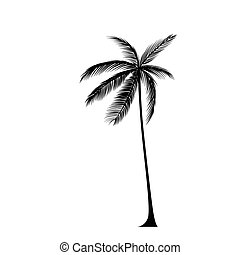 palm tree black silhouette isolated over white background