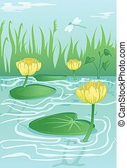 yellow water-lilies in calm water - blooming yellow...