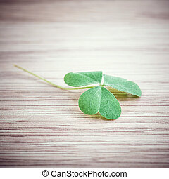Closeup clover leaf on wooden background