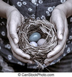 Nest with Colorful eggs in woman's hands.