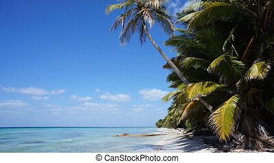 Beach on Isla isle Saona 2013 in the Dominican Republic -...