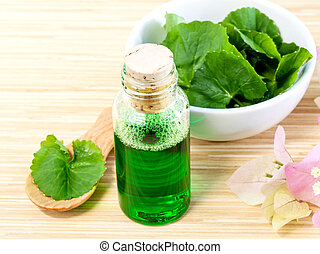 Natural Spa Ingredients - Centella asiatica Urban, Asiatic...