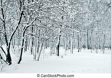 Winter, Natur