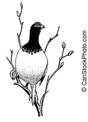 Willow Ptarmigan - spring Lagopus lagopus Pen-and-Ink...
