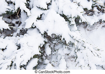 tree covered with snow in winter